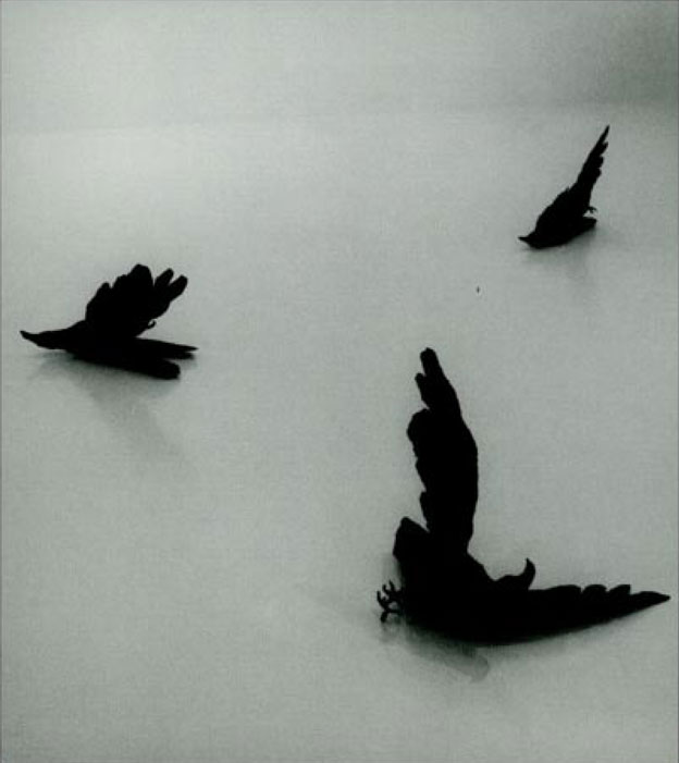 Directions: Kiki Smith: Night