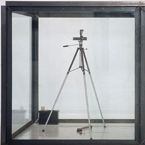 """Damien Hirst, """"The Asthmatic Escaped II,"""" 1992"""