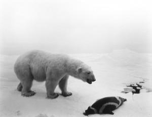 "Hiroshi Sugimoto - ""Polar Bear"""