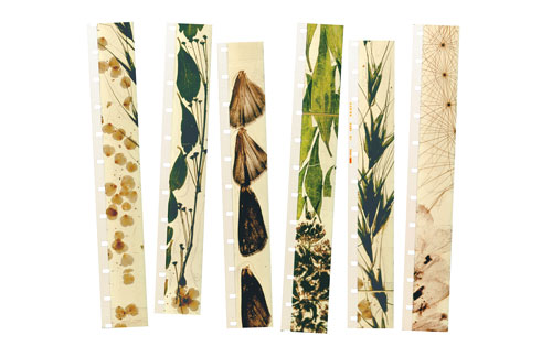 "Film strips from Stan Brakhage's ""Mothlight,"" 1963. Courtesy of the Estate of Stan Brakhage and Fred Camper (www.fredcamper.com)"
