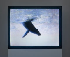 """Peter Coffin, """"Untitled (One Minute Whale Breach),"""" 2005. Courtesy of the artist"""