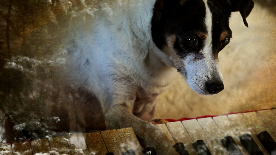 Laurie Anderson, Still from Heart of a Dog, 2015