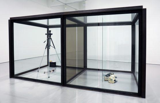 Damien Hirst, The Asthmatic Escaped II, 1992