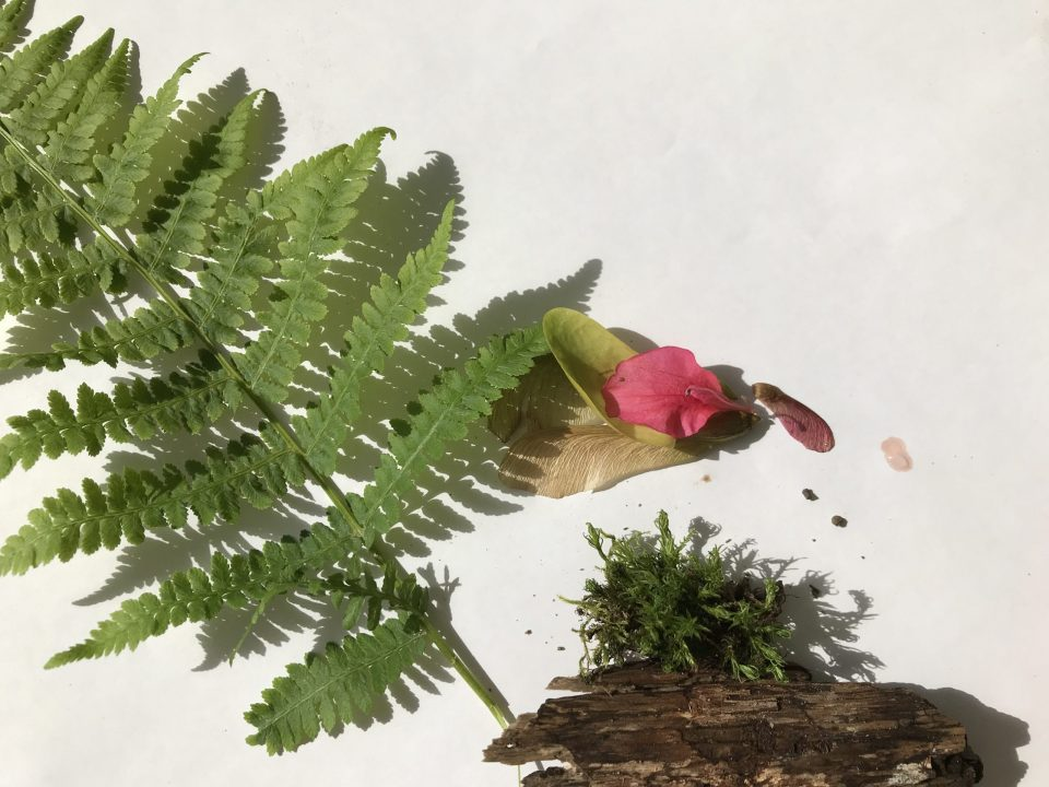 Tuft of moss sits on a piece of bark at the bottom of the composition, a large fern leaf is positioned diagonally across the white surface, pink flower petal rests in the center